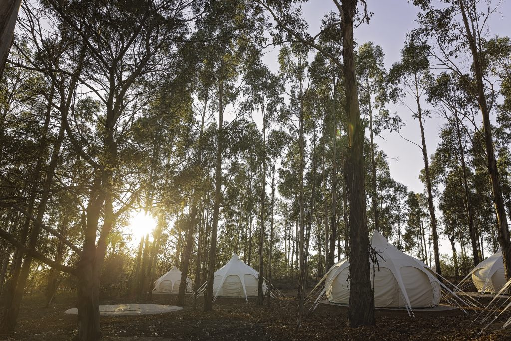 Our Lotus Belle tents are set up in a beautiful forest at Spring Bay Mill.<